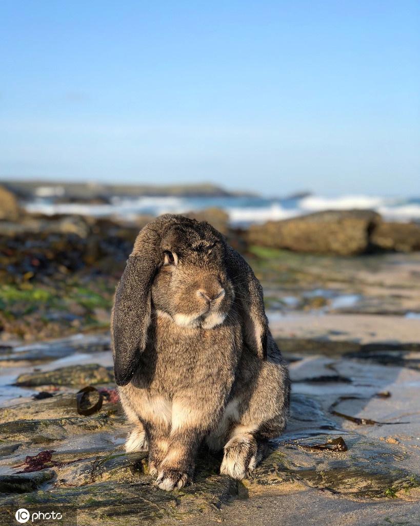 动物跨越物种友情!英国海豹与兔子友谊深厚隔着玻璃热情交流