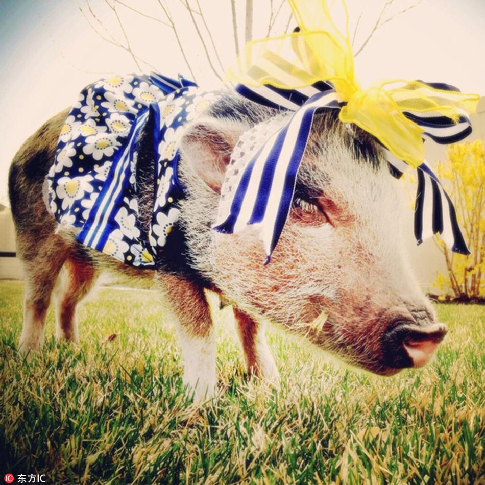 猪年将至!晒晒二师兄的时尚美照 学做一只精致的猪