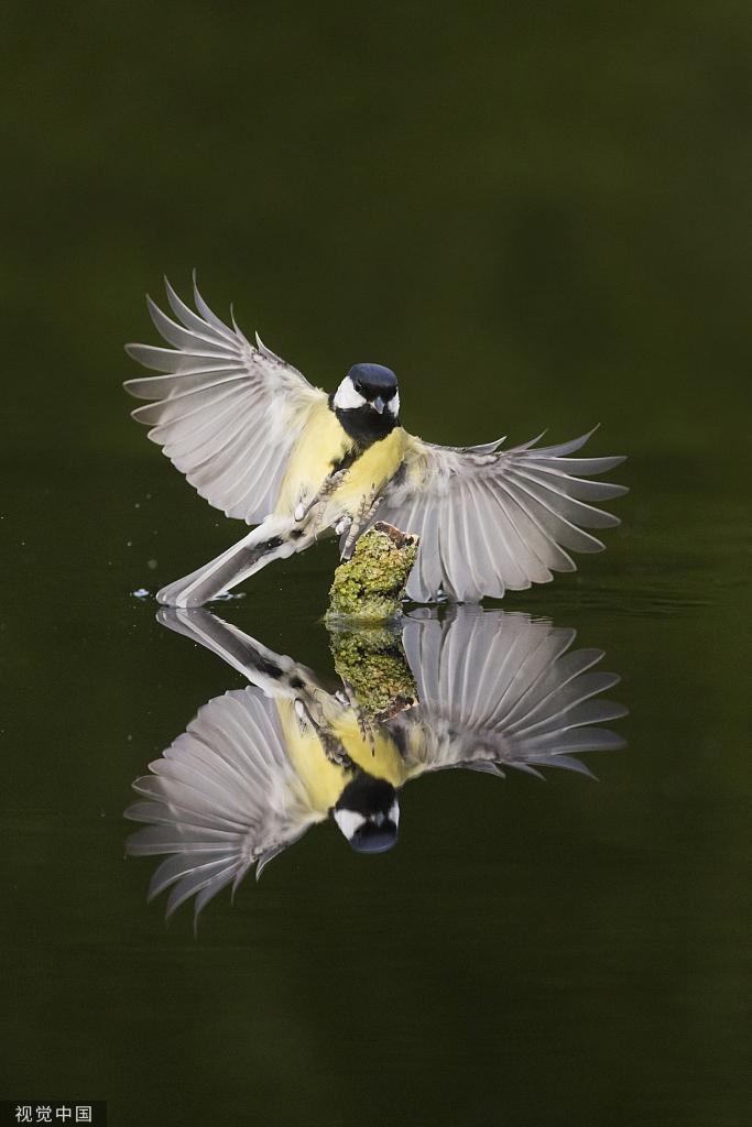 山雀泛起倒影完美池塘:水中分辨大雁落脚镜像涟漪的七律图片