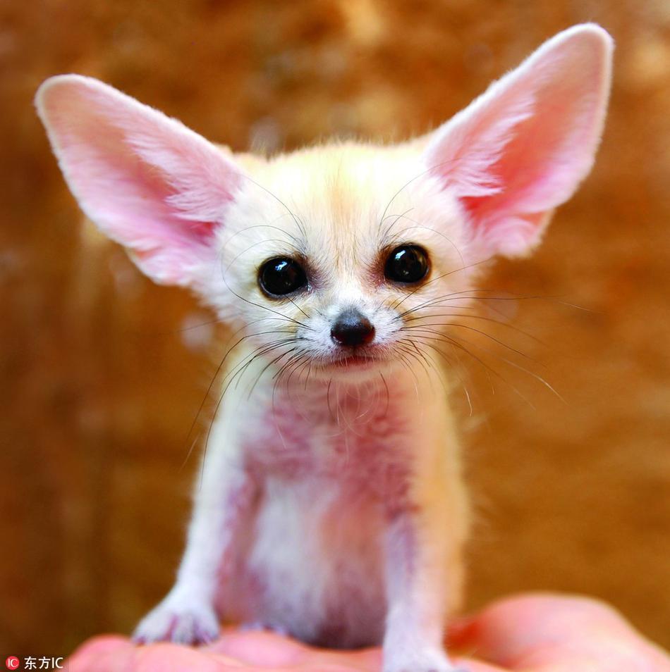 这十种罕见动物的宝宝萌照