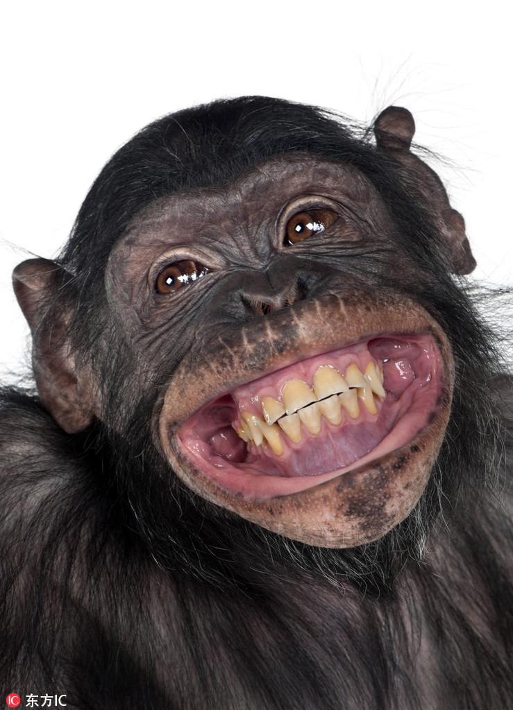 有的咧嘴大笑,有的吐舌搞怪,有的用手指堵住耳朵,还有的故作惊讶表情图片