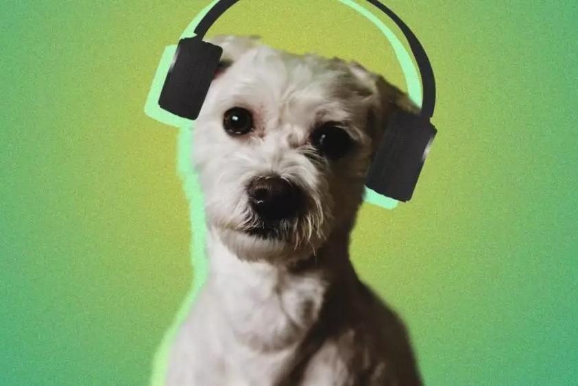 """就想""""对牛弹琴""""  音乐App要为你的宠物做歌单"""