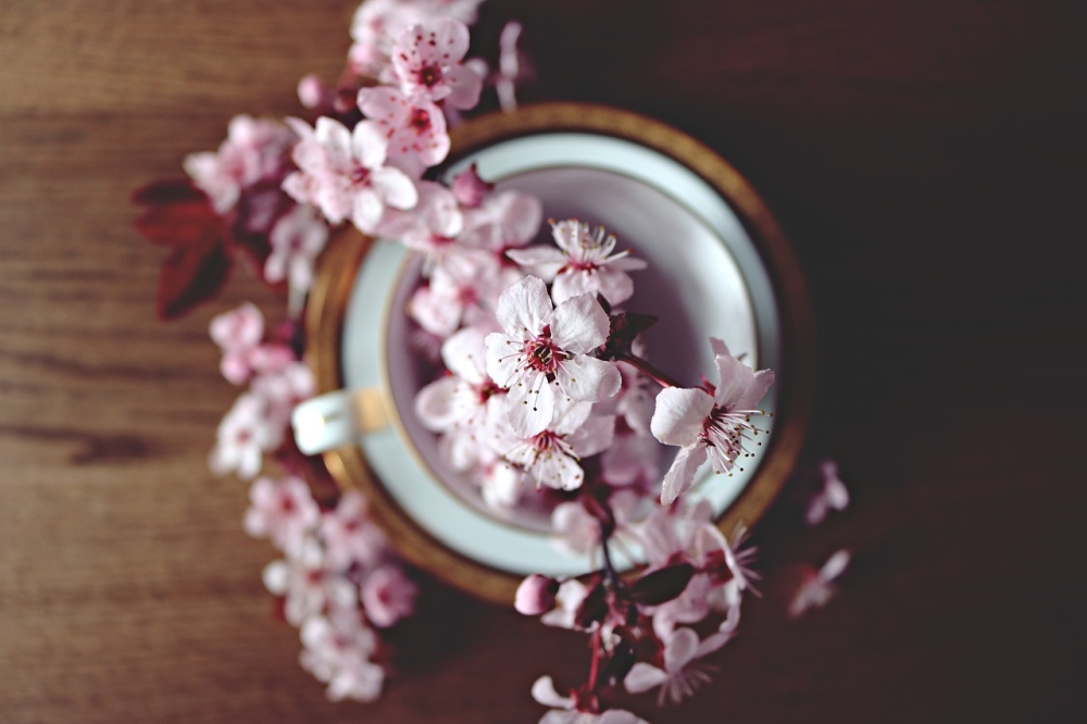 星巴克推樱花味拿铁 樱花吃进嘴里什么感觉?