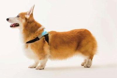 宠物智能穿戴设备亮相CES 可实时显示宠物情绪