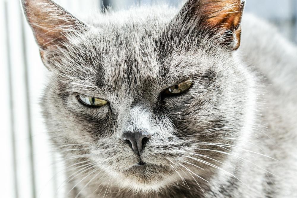 """日本工作室定?#21860;?#29483;面具"""" 让铲屎官变成猫"""