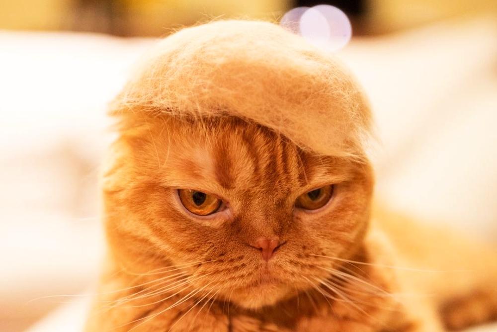 物归原主!让猫毛重回猫身 这效果简直太赞