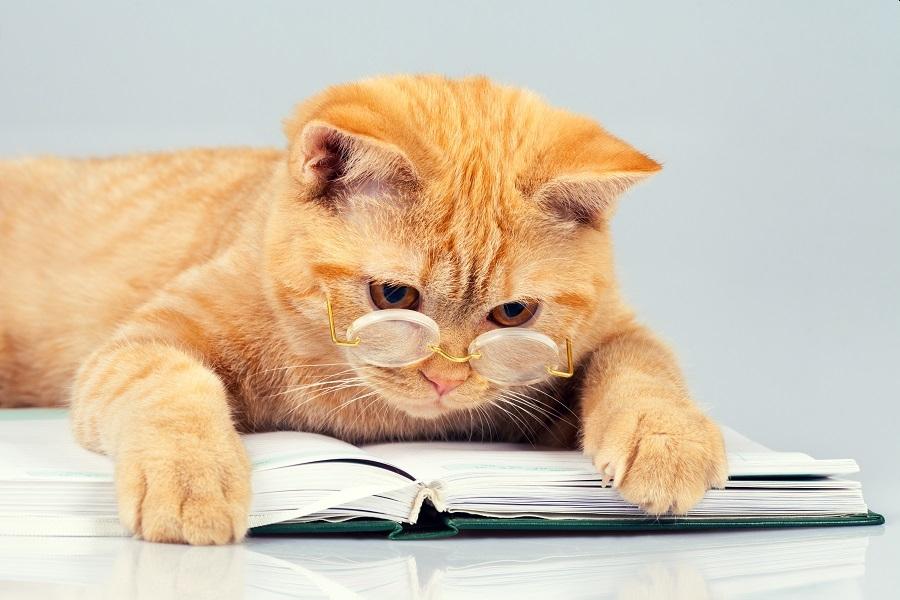 猫奴必备!日本兽医出书 教人给猫穴位推拿