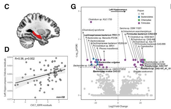 肥胖伤菌害脑!通过肠菌代谢影响部分记忆能力
