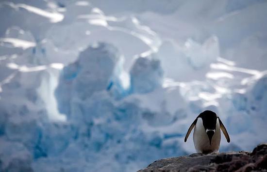 南极的企鹅都是假的!真的已经在北极灭绝了......