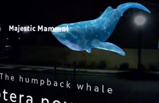 Magic Leap One的真实鲸鱼展示效果