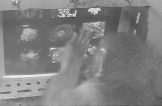 一项关于灵长类认知危险的实验中,日本猕猴在看屏幕上的蛇照片。图片:Masahiro Shibasaki et al. / Journal of Comparative Psychology (2009)