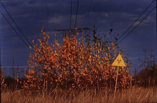 禁区内受辐射致死的红色树叶