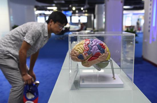 """欧洲脑计划""""打水漂"""" AI离人类大脑究竟有多远?"""