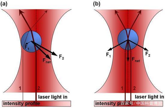"""来源:公有领域 △激光汇聚在束流最细处(称为""""光腰""""),微粒将在此处被俘获于三维光学势阱"""