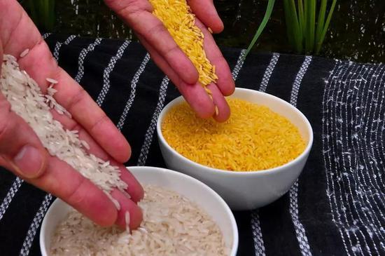 圖 | 黃金大米與普通大米