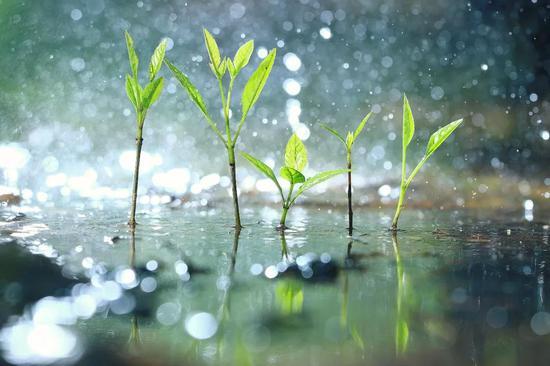 春天最后一个节气!谷雨节气有哪些讲究你都知道吗?