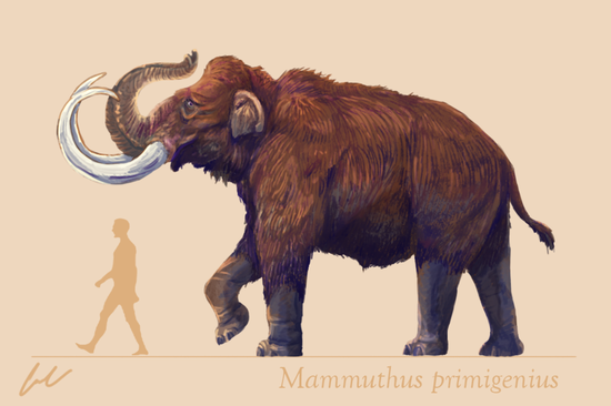 ▲最后留下的长毛猛犸与今天非洲象体型相当。(来源:DeviantArt)