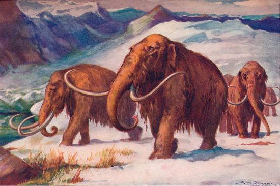 ▲猛犸象是最受欢迎的古生物之一。(来源:New York Post)
