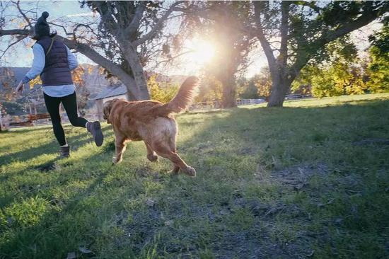 和狗子來一個林間狂奔吧 (圖片來源:pixabay)