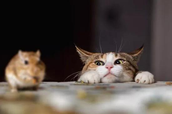 """亚马逊产品经理深夜拦截""""杀手""""猫"""