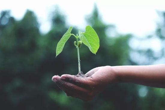 植物比动物有更强的替换受损或死亡细胞的能力。图片来源:pexels