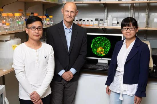干细胞研究再迎突破!有望回答生命早期发育之谜