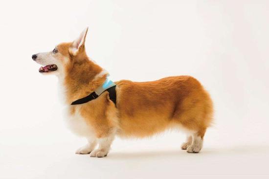 宠物智能穿戴设备亮相CES可实时显示宠物情绪