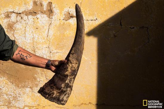 世界上最大的犀牛种群如何在十年内减少了70%