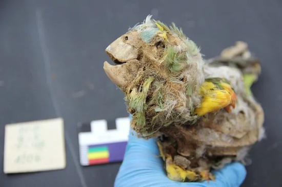 鹦鹉被卖到沙漠,被拔毛,被做成木乃伊
