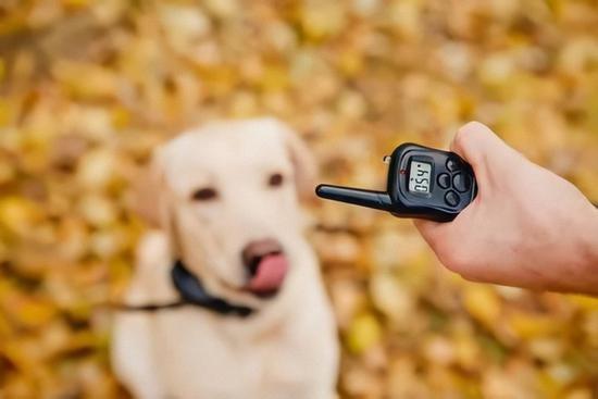 老人被狗绳绊倒身亡也许养狗需要用科技来改造下了