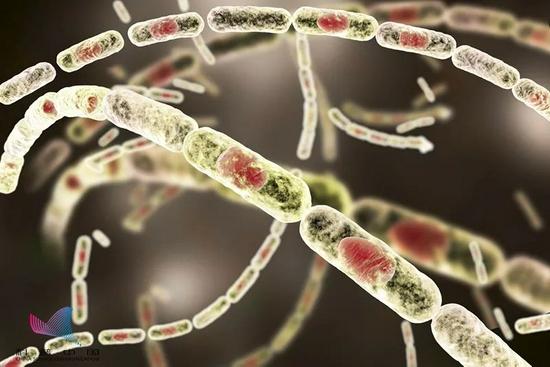 山东一学生感染炭疽死亡!传染性多强?如何预防?答案都在这