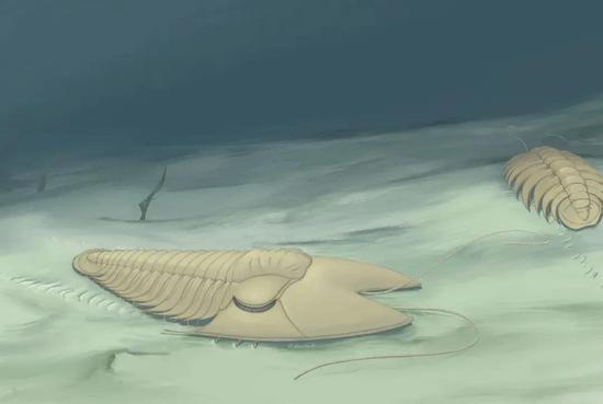 耳形范特西虫(Phantaspis auritus)复原图(霍秀泉绘)