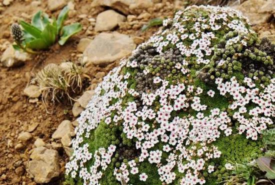 研究发现横断山是高寒植物的起源地和避难所(图4)