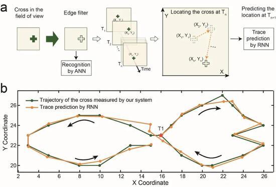 """图4,用于动态视觉任务的类脑视觉系统。(a)类脑视觉系统用于运动追踪的流程图。利用视网膜形态传感器,对视野中的 """"十""""字目标进行边缘特征提取,并将""""十""""字目标的坐标以时序信息形式输入循环神经网络,对下一时刻该目标的轨迹进行预测。(b)类脑视觉系统经过运动追踪获得的""""十""""字目标物运动轨迹(绿色线)与经过轨迹预测获得的""""十""""字目标物运动轨迹(橘黄色线)基本一致。"""