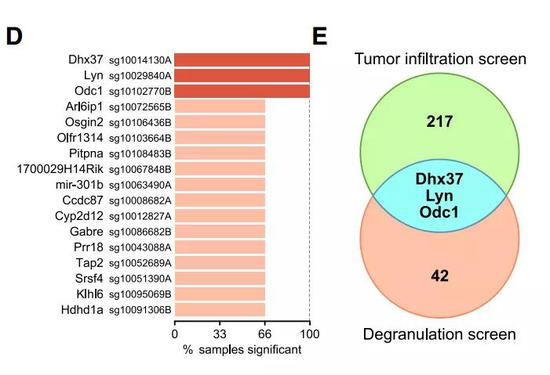 ▲Dhx37是本研究中找到的一个新靶点(图片来源:参考资料[1])