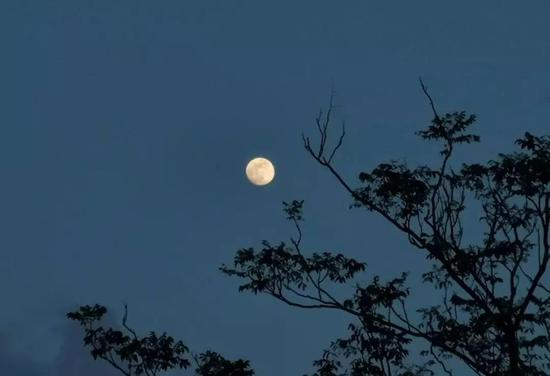 举头望月的夜晚,你在想什么呢?图片来源:图虫创意