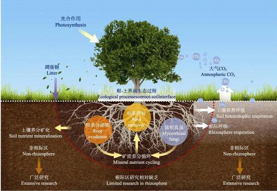 图10 森林生态系统中根际生物地球化学循环过程研究框架图(图片引自文献1)