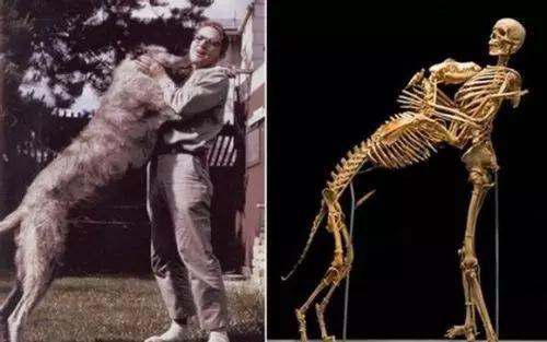 人类学教授GrovefKrantz和他的爱犬(图片来源:文献来源[6])