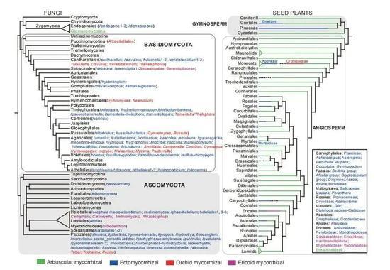 图3 形成菌根的种子植物和真菌类群汇总 (图片引自文献1)
