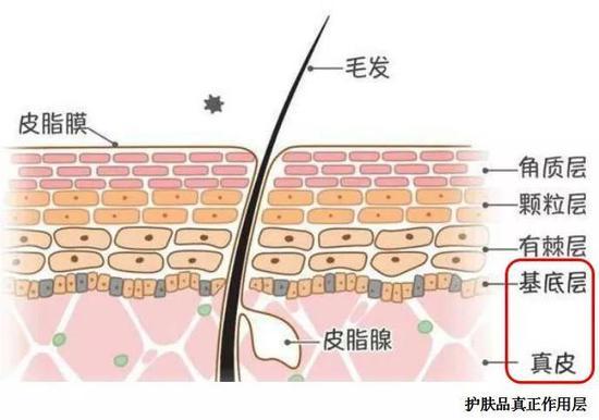 图片来源:https://www.sohu.com/a/167048153_725849