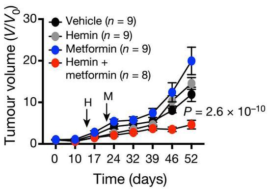 血红素和二甲双胍联用,抗癌效果明显
