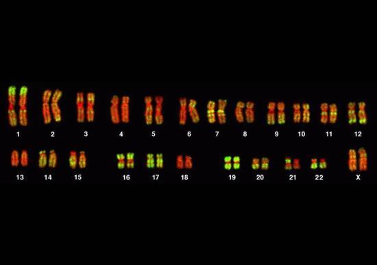 《【多彩联盟娱乐登录平台】拥有XX染色体,却发育出男性性器官:一个基因突变改变人类性别》