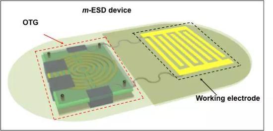 图   电刺激贴片的构成示意图。(来源:Xudong Wang, University of Wisconsin–Madison)