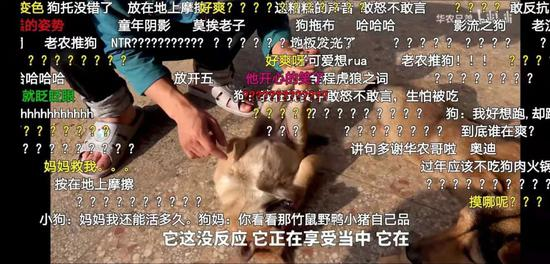 刘苏良家经常出镜的小狗