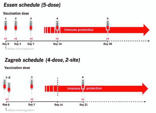 """""""5针法""""和""""2-1-1式""""PEP接种方案(图片来源:Researchgate)"""