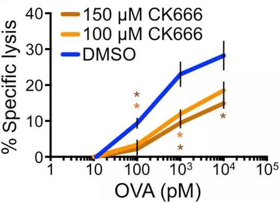 CK666作用下,T细胞对靶细胞裂解能力明显下降