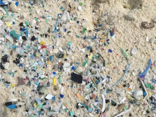 South Island东边的微型垃圾(1-5mm)|来源:Jennifer Lavers