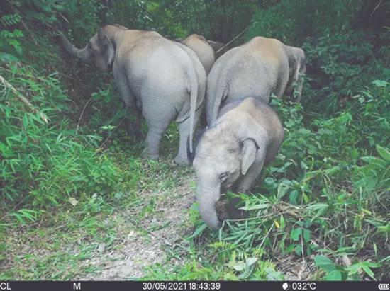 从东北虎到亚洲象,这届动物怎么了