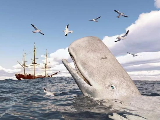渔业船业对鲸鱼的生活造成影响