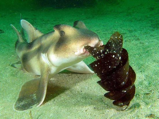 图片来源:推特@Shark Guardian
